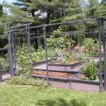 Vegetable Gardening in limited Spaces