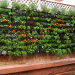 vertical Gardening in Small Spaces